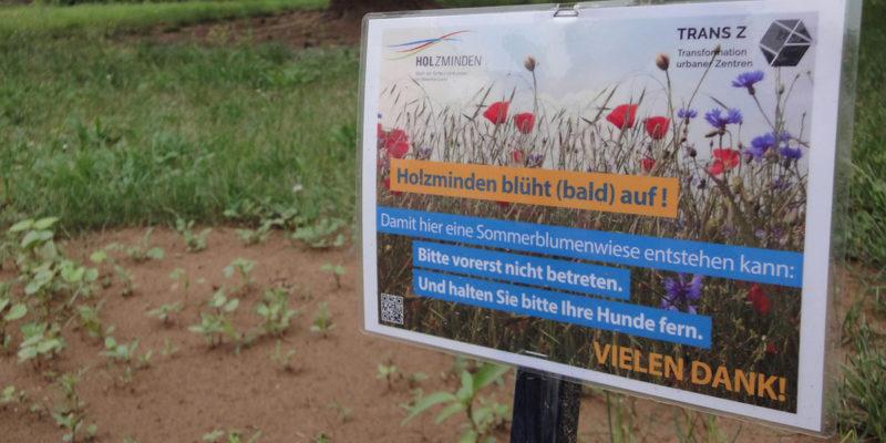 Auf Einem Brachliegenden Grundstück In Der Altstadt Wurden Als TransZ-Aktion Blumensamen Ausgebracht. Engagierte Bewohner Kümmern Sich Um Die Pflege Der Blumenwiese.
