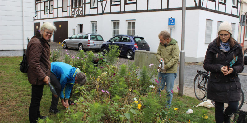 Im Herbst Wurde Zuerst Die Städtische Grünfläche Am Kolk / Ecke Unterbachstraße Mit Verschiedenen Blumenzwiebeln Bestückt.
