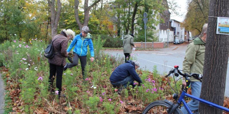 Mit Bürgerschaftlichem Engagement Wurden Blumenzwiebeln Auf Der Verkehrsinsel Am Hafendamm Gesetzt