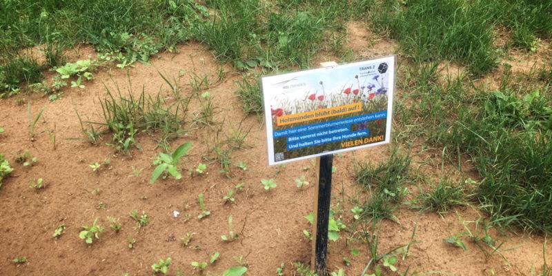 Nach Der Pflanzaktion / Aussaat Wurden Die Flächen Entsprechend Gekennzeichnet, Um Den Pflanzen Ein Gutes Wachstum Zu Ermöglichen.
